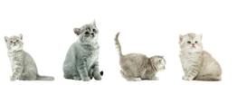 8 x Fenstersticker Katzen, Cats, Kätzchen, Katzenkinder, Fensterbilder, Windowsticker, Fensterdeko, Fenster Tattoo, Fensterfolie, Fliesensticker, Fliesenaufkleber, 4 verschiedene Designs, mehrmals wiederverwendbar - 1