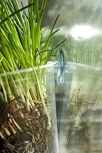 Kräutertopf-Trio 'Basil' für Küchenfenster inkl. Beschriftungsfolie und Kreide | Fresh Herbs Trio | Kräuter | Garten | Kräutergarten | Fensterdekoration | Geschenk | Ø 13 cm | Höhe: 16 cm - 5