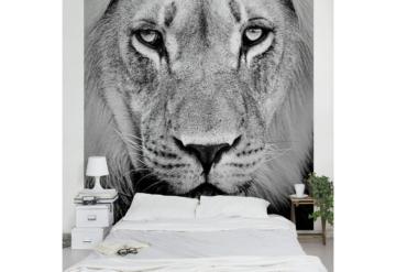 Bilderwelten Vliestapete Quadrat »Alter Löwe«