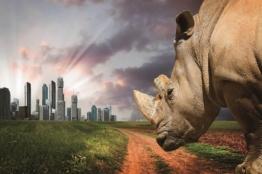 HTI-Living Glasbild »Nashorn«
