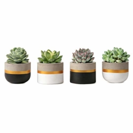 Mkouo 7.6cm Zement Succulent Pflanzen Modern Concrete Kaktus Blumentöpfe Small Clay Innen Herb Window Box Container for Home and Office Decor, Set of 4 - 1