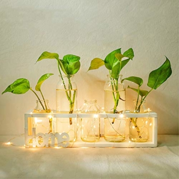 SUNRUNERS Glas-Pflanzgefäße für den Innenbereich mit Flaschenbeleuchtung, Hydrokultur, Pflanzen-Holzständer für Zuhause, Büro, Dekoration, Rohholz, 5 Terrarium - 2