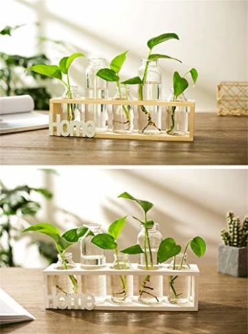 SUNRUNERS Glas-Pflanzgefäße für den Innenbereich mit Flaschenbeleuchtung, Hydrokultur, Pflanzen-Holzständer für Zuhause, Büro, Dekoration, Rohholz, 5 Terrarium - 4