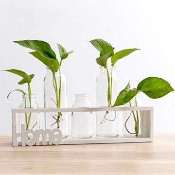 SUNRUNERS Glas-Pflanzgefäße für den Innenbereich mit Flaschenbeleuchtung, Hydrokultur, Pflanzen-Holzständer für Zuhause, Büro, Dekoration, Rohholz, 5 Terrarium - 1