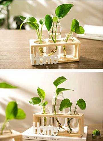 SUNRUNERS Glas-Pflanzgefäße für den Innenbereich mit Flaschenbeleuchtung, Hydrokultur, Pflanzen-Holzständer für Zuhause, Büro, Dekoration, Rohholz, 5 Terrarium - 5